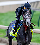 LOUISVILLE, KENTUCKY - APRIL 30: Roadster, trained by Bob Baffert, exercises in preparation for the Kentucky Derby at Churchill Downs in Louisville, Kentucky on April 30, 2019. John Voorhees/Eclipse Sportswire/CSM