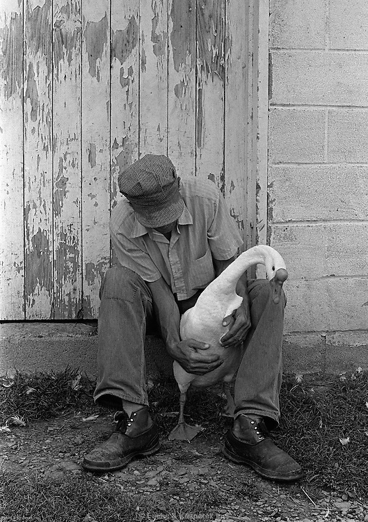Calvin Wilcox tries to calm a goose outside his barn in Napoli, N.Y. 1974