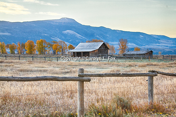 Farms on Mormon Row in Jackson Hole, Wyoming are popular tourists spots.