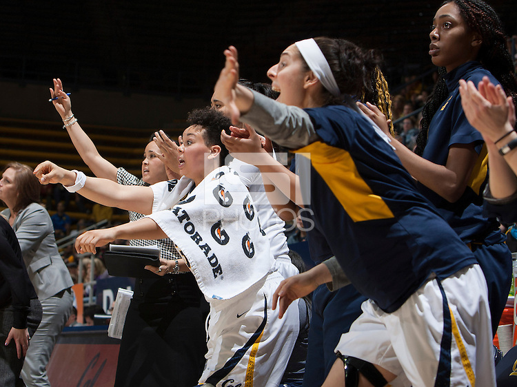 California players celebrate during the game against Washington at Haas Pavilion in Berkeley, California on March 1st, 2014.   Washington defeated California, 70-65.