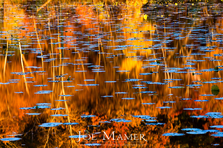 Maple and oak leaves floating in a pond with colorful Autumn foliage reflected in the water.