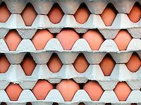 FARMERS MARKET: Eggs In Cartons