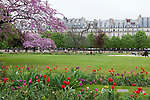 Tuileries Gardens (Jardin des Tuileries) in spring and Parisian architecture, Paris, France, Europe