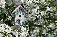 01715-03009 Bird nestbox in blooming Sugartyme Crabapple Tree (Malus sp.) Marion Co., IL