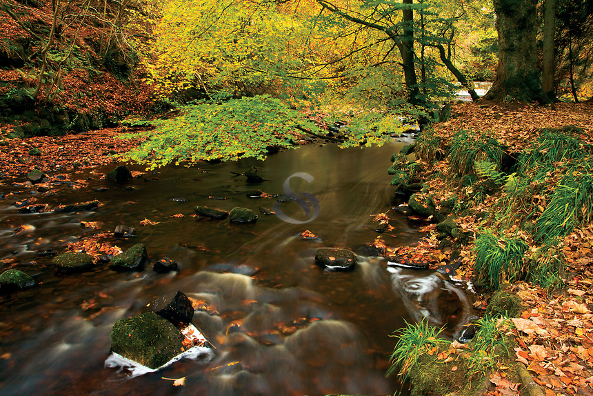 The Rotten Calder in autumn, Calderglen Country Park, East Kilbride, South Lanarkshire