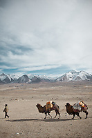 Led by Kyrgyz men, a caravan of Bactrian camels carrying goods for the next camp..From Ech Keli to Kyzyl Qorum..Trekking with yak caravan through the Little Pamir where the Afghan Kyrgyz community live all year, on the borders of China, Tajikistan and Pakistan.