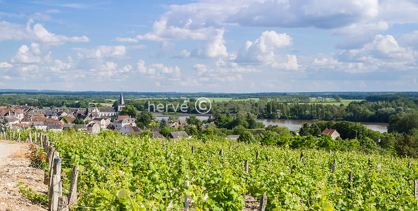 France, Nièvre (58), Réserve naturelle nationale du val de Loire, Pouilly-sur-Loire, village et vignoble en été