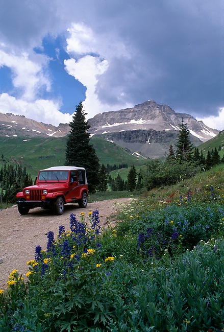 Summer wildflowers along 4-wheel drive road, Gilpin Park, Uncompahgre Nat'l Forest, CO