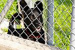 Dog behind fence, Hund hinter dem Zaun, Mezzovico near Lugano, Ticino, Tessin, Switzerland, Schweiz.