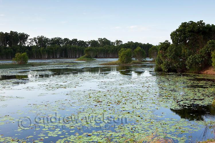 Cattana Wetlands.  Smithfield, Cairns, Queensland, Australia