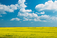 Canola crop and clouds<br /> Foam Lake<br /> Saskatchewan<br /> Canada