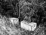 Boxes hidden in woodland