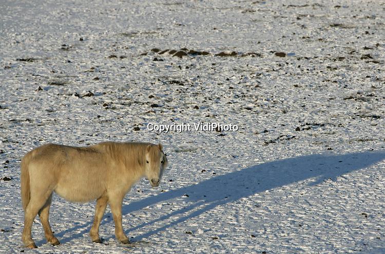 Foto: VidiPhoto..RANDWIJK - Sneeuwlandschap in de uiterwaarden langs de Rijn bij het Betuwse Randwijk.