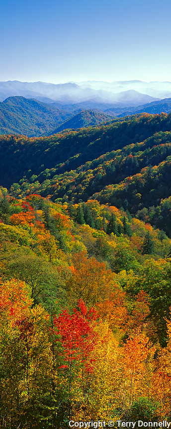 Great Smoky Mountains National Park, TN/NC<br /> Fall colored folded hills of Shot Beech Ridge with distant haze over the Deep Creek Valley