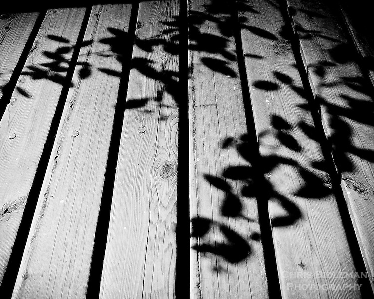 Black and White (B&W) shadow of bamboo on boards of deck look like kanji characters painted on floor.