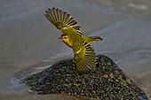 Birds - South America