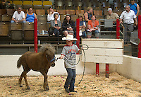 Blake Neuman, 10, from Enumclaw, Wash. walks a pony named Ray into the auction ring in front of Ray's rescuers at the Enumclaw Sale Pavilion in Enumclaw, Wash. on May 9, 2015. (photo © Karen Ducey Photography)