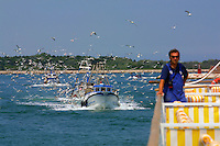 The Casanova is followed by fishing boats and their accompanying seagulls while entering the port of Chioggia.
