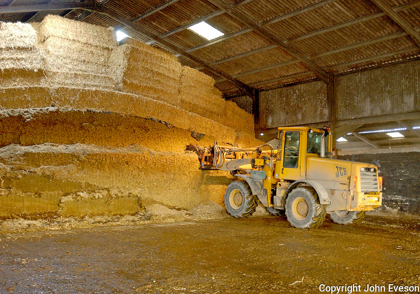 A JCBH loader with an indoor silage clamp with a layer of grass silage, then maize, and a covering of straw.