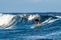 Namotu Island Resort, Nadi, Fiji (Monday, February 12 2018): The surf was in the 2' range on a short period wind swell this morning with strong South winds. The surf was onshore at most breaks and some guests had a session at Namotu Lefts  and Swimming Pools before the tide got too low. There was also an afternoon sessions in similar conditions.  Photo: joliphotos.com