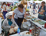 Matriarch of the Kreda family, Sallie Kreda, along withbooth operator, Linda, working at the Grey Mouse Farm booth at the Saugerties Farmer's Market on Main Street in the Village of Saugerties, NY, on Saturday, June 10, 2017. Photo by Jim Peppler. Copyright/Jim Peppler-2017.
