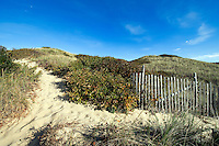 Dune trail to beach, Head of Meadow Beach, Truro, Cape Cod, MA