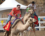 Cole Chase races in the International Camel Races in Virginia City, Nev., on Friday, Sept. 9, 2011. .Photo by Cathleen Allison