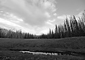 Scenery in black and white at Blewett Pass, in the Wenatchee Mountains pond in a meadow. Stock photography by Olympic Photo Group