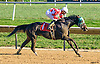 Sheikinator winning at Delaware Park on 10/15/16