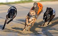 Greyhound Racing - Romford 29-Jan-2009