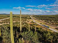 Sahuaros en el Desierto de Sonora