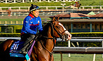 October 30, 2019: Breeders' Cup Juvenile Turf entrant Graceful Kitten, trained by Amador Merei Sanchez, exercises in preparation for the Breeders' Cup World Championships at Santa Anita Park in Arcadia, California on October 30, 2019. Scott Serio/Eclipse Sportswire/Breeders' Cup/CSM