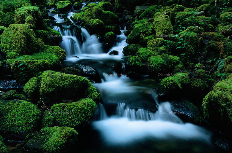 A cascading creek of icy snowmelt creates an idyllic scene rushing over emerald moss-covered rocks to reach the Sol Duc River. <br /> Park rangers must guard against poachers who scalp the forest of mosses and ferns for sale to florists and nurseries. Thieves that are more brazen cut down and haul away red cedar trees. Eleven major river systems drain the Olympic Mountains. In 1988, Congress designated 95% of Olympic National Park's 922,650 acres as Wilderness.