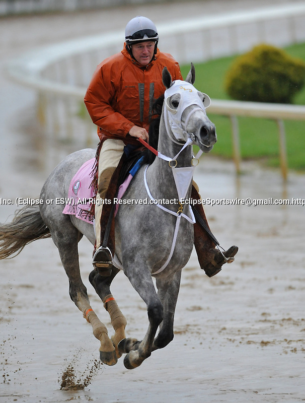 Joyful Victory exercises with trainer Larry Jones aboard in preparation for the Kentucky Oaks at Churchill Downs in Louisville, Kentucky to be run May 6, 2011.
