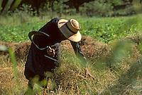 Europe/France/Auvergne/15/Cantal/Le Rouget: Agricultrice lors d'une fenaison à la faucille <br /> PHOTO D'ARCHIVES // ARCHIVAL IMAGES<br /> FRANCE 1980