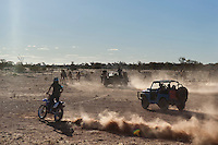 Wild Camels in the Australian desert being mustered by motor bike and 4wd, Central Australia, Northern Territory, Australia.