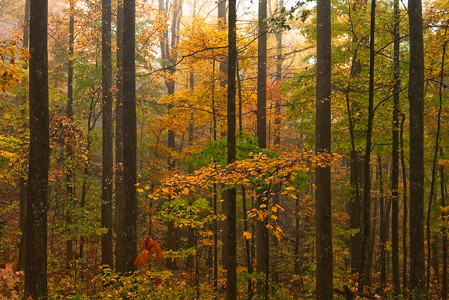 Autumn color and fog, Jim Timmerman Natural Resources Area at Jocassee Gorges
