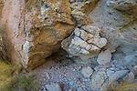 Andean Mountain Cat (Leopardus jacobita) latrine in cave, Abra Granada, Andes, northwestern Argentina