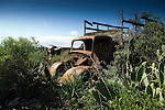 Old truck, and prickly pears,Tenerife, Canary islands, Spain,