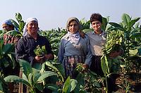 Bulgarien, Tabakernte bei Vraza