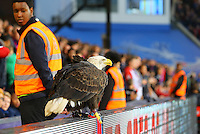 Kayla the Crystal Palace Eagle during the EPL - Premier League match between Crystal Palace and Liverpool at Selhurst Park, London, England on 29 October 2016. Photo by Steve McCarthy.
