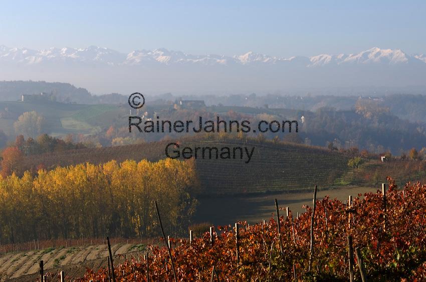 Italien, Piemont, Region Langhe, Weinberge vor der Bergkette Alpi Cozi   Italy, Piedmont, Region Langhe, vineyard, Alpi Cozi mountains