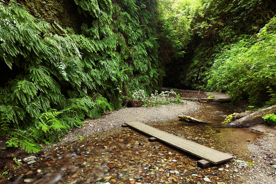 Home Creek flowing through Fern Canyon, Prairie Creek Redwoods State Park, Humboldt County, California, USA