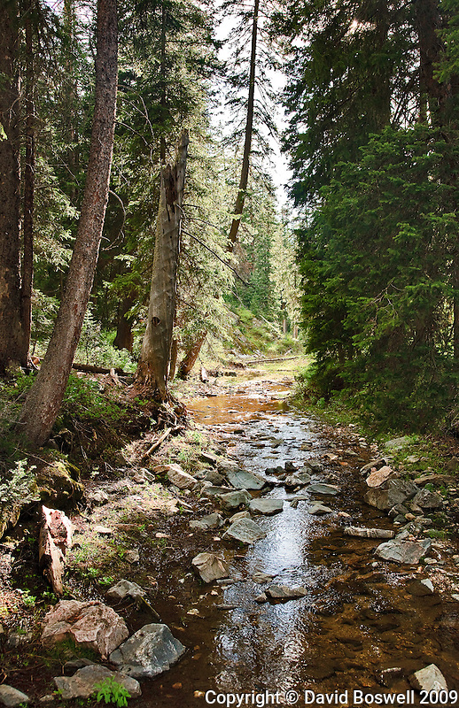 A stream flows through Death Canyon in Grand Teton National Park, Wyoming.