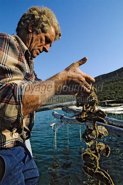 Croatie/Dalmatie/Ston: Ostréiculteur<br /> PHOTO D'ARCHIVES // ARCHIVAL IMAGES<br /> YOUGOSLAVIE  1990