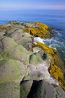 Volcanic rocky shore of St. Paul Island, Pribilof Islands, Bering Sea, Alaska