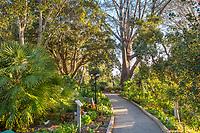 Pathway at San Diego Botanic Garden
