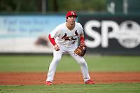 Palm Beach Cardinals shortstop Michael Perri (4) during a Florida State League game against the Clearwater Threshers on August 9, 2019 at Roger Dean Chevrolet Stadium in Jupiter, Florida.  Palm Beach defeated Clearwater 3-0 in the second game of a doubleheader.  (Mike Janes/Four Seam Images)