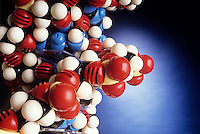SPACEFILLING DNA ATOMIC MODEL<br /> DNA Is A Polymer Chain Of Nucleotides<br /> Nucleotides bonded through phosphodiester linkages make up the primary structure of deoxyribonucleic acid. The sum of the %'s of A (adenine) &amp; G (guanine), purine bases, equals the sum of the %'s of C (cytosine) &amp; T (thymine), pyrimidine bases.