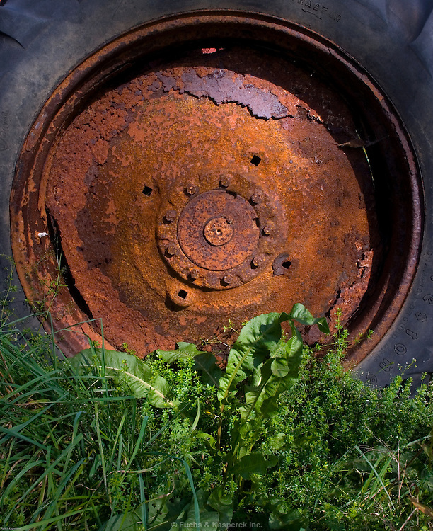 The wheel of an abandoned tractor stands in constrast to the weeds surrounding it.